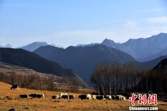 图为地处脑山的青阳社牧场。 陈文年 摄