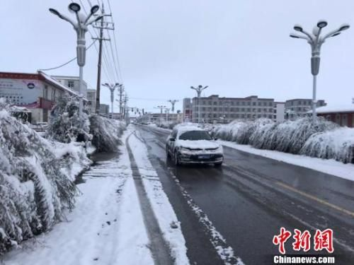 10月1日,国庆长假首日,青海海西州天峻县突降暴雪,给当地交通和牛羊觅食带来不利影响。 史坤忠 摄