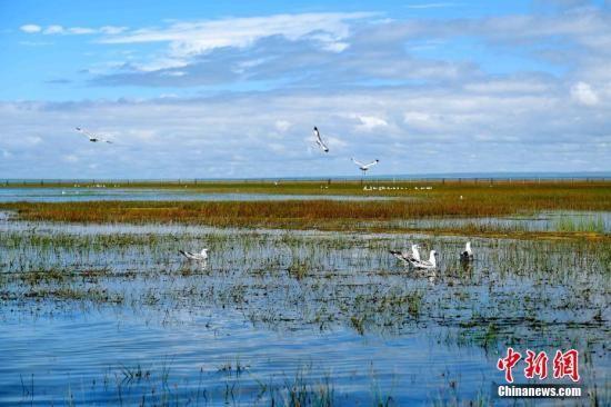 资料图:青海湖北岸海北藏族自治州刚察县仙女湾湿地。 中新社记者 李隽 摄