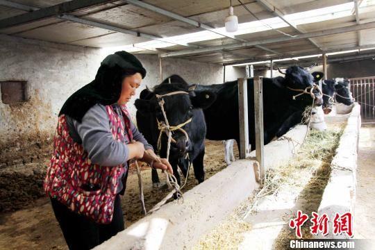 图为妇女饲养牲畜。(资料图) 石延寿 摄
