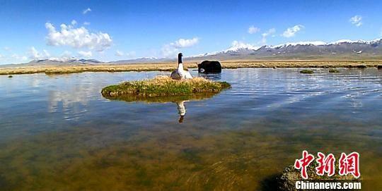 图为红外相机记录到的黑颈鹤完整孵化视频截图。 雪联 摄