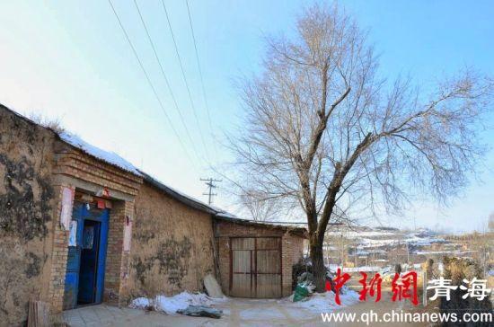 图为李洪占家的小院,门口两棵近10米高的榆树已经生长了60余年。鲁丹阳摄