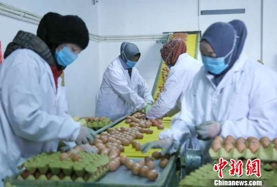 图为养殖场工作人员正在分拣鸡蛋。 钟欣 摄