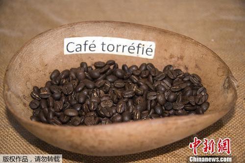 资料图:非洲农业咖啡