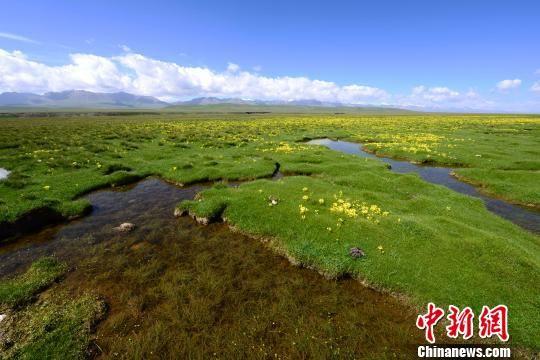 资料图为祁连山沼泽湿地。祁连山国家公园青海管理局供图