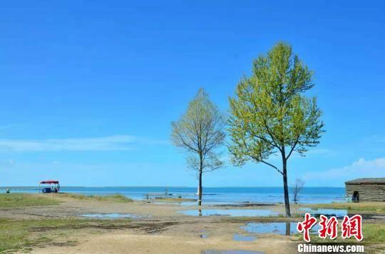 图为夏季的青海湖畔。(资料图) 鲁丹阳 摄