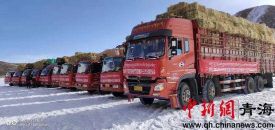 图为大卡车运输的饲草料。