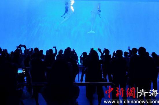 图为观看白鲸表演的群众。鲁丹阳摄