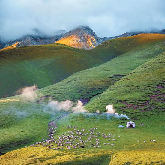 祁连山下好牧场。祁连山国家公园青海省管理局供图