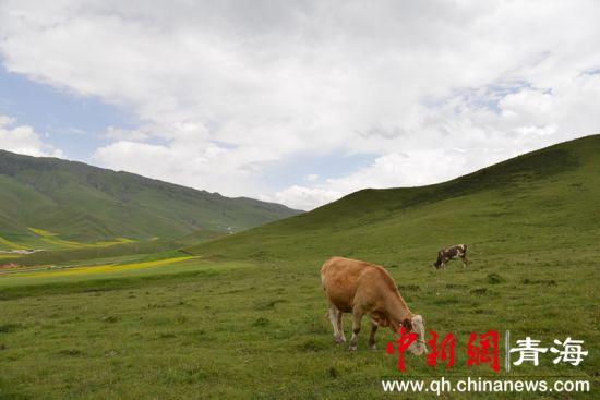 图为祁连山下美丽风景。李隽 摄