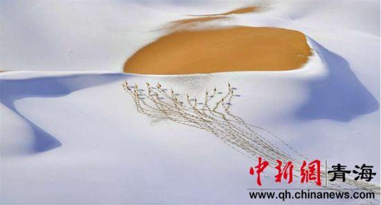 图为樊尚珍获环境类单项冠军作品《雪域精灵》。樊尚珍摄