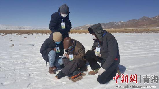 图为青海隆宝国家级自然保护区工作人员开展疫情期间野生动物监测工作。钟欣摄。