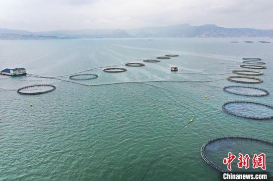 图为龙羊峡水库上的高原冷水鱼养殖场。 仁青措 摄