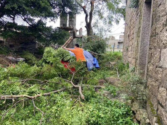 福建平潭境内刮断的树木压住了客户车辆 平安产险车险查勘员迅速救援