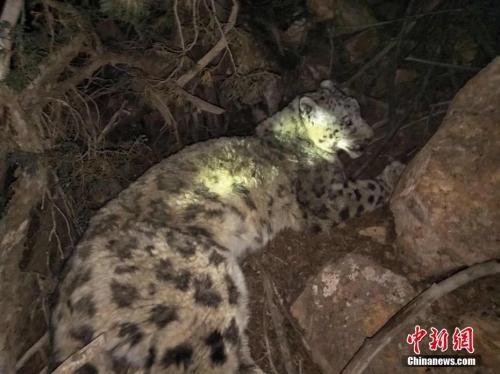 青海民间环保组织首次在藏区神山周边进行大规模雪豹调查
