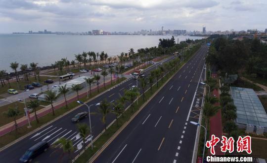 """海口街头补种近万株椰子树 增加""""椰城""""特色"""