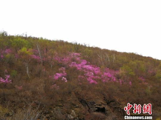 """内蒙古开启""""花的盛宴"""" 通辽千亩花海吸引万名游客"""