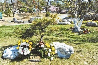 生态葬的背后:部分价格仅为传统立碑的三十分之一