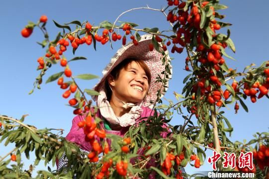 今年青海省14.79万余城乡劳动力接受技能培训增收